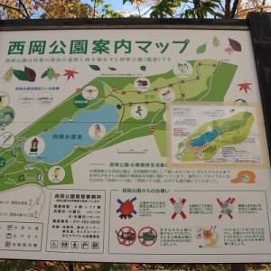 西岡公園散歩