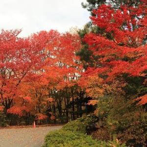 紅桜公園へ その1