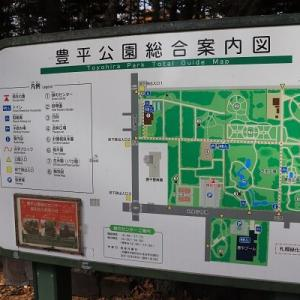 豊平公園のノムラカエデ