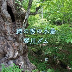 【姥の栃の水場・琴川ダム】大自然を肌で感じる癒しの山水。気持ち良い風が抜ける琴川ダムで深呼吸