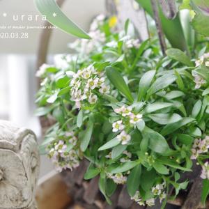 ベランダGardenのお花たち