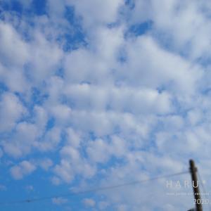 ひつじ雲と今朝のお花たち