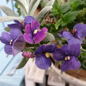 9月・今咲いているお花