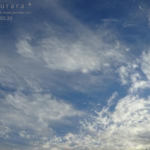 久し振りの秋の空とプレクトランサス・モナラベンダー