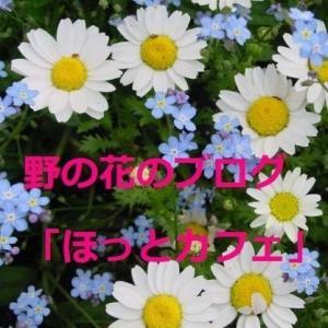 野の花のブログ「ほっとカフェ」人気記事ベスト20