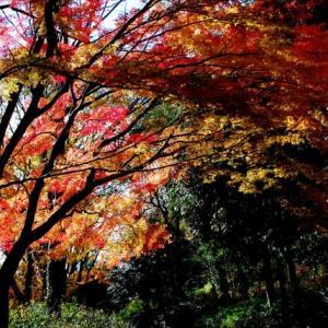 「遅い秋の紅葉」