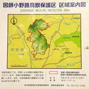 「小野路里山 : ハイキング」