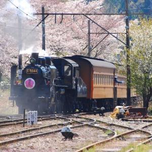 「SL列車と桜トンネル」