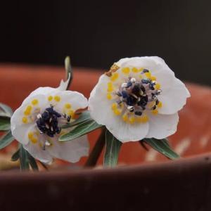 「小さな春」