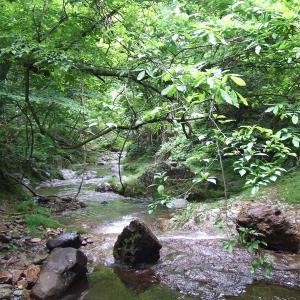 仙台市・宮城県内の水遊び・川遊びができる公園【全14ヶ所】