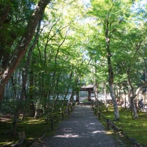 モシュ印/コケ寺リウム① ♡ 地蔵院