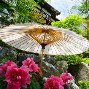 華の池~水面に浮かぶ天竺牡丹~☆岡寺