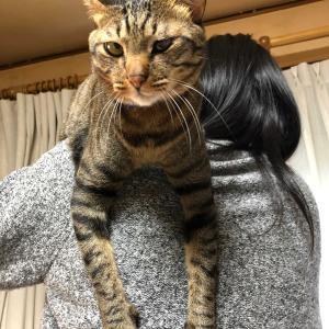 肩乗り猫おててはパー!