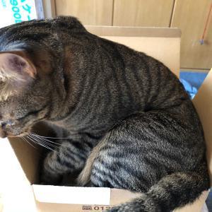 箱に入りきれなかった、こにゃん!