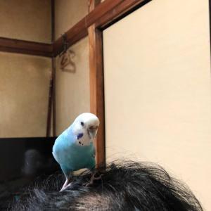 今日の空ちゃん!