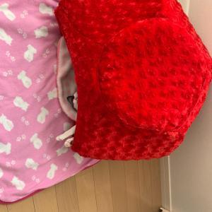トロの寝床