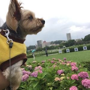 小岩菖蒲園に行ってきました