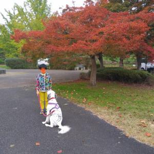 紅葉と犬と・・・