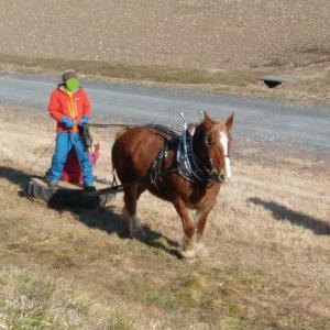 お馬さんと午前中のマリー