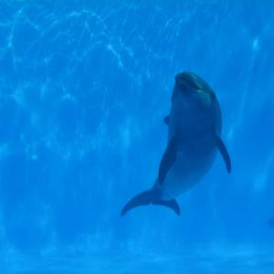 九十九島水族館「海きらら」イルカ水槽