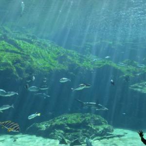 九十九島水族館「海きらら」大水槽の眺めは絵のようであきませんね。