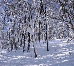 【訂正】雪の低山トレッキング企画2019-2020チラシ