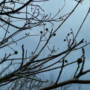 干支の名を持つ植物は お正月用の植物は何かな