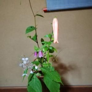 額が3枚のガクアジサイは珍しいです 籠の花は残り物