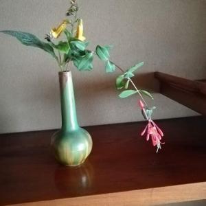 マツムラ草 月貫忍冬 豆柿 秋の花
