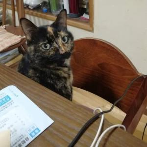 ようやく覚えた おバカ猫のソラ