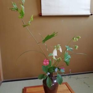イタヤカエデに伊勢撫子 盛りだくさんの花になりました