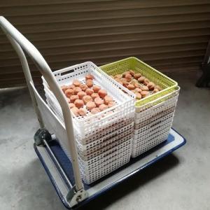 梅干 土用干し 籠は100均で イケてます