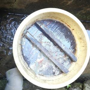 梅干 南高小梅 桶を開けました