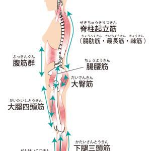 腰痛を改善するには足首を柔らかくしましょう。