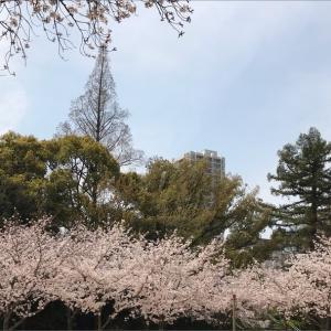 【自粛】外出しなかった休日【満開の桜、集合体恐怖】