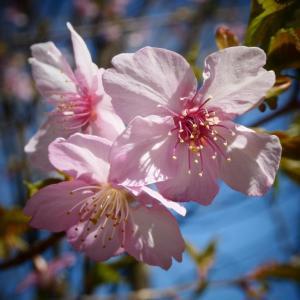 ☆彡 春もうー すぐ ☆彡