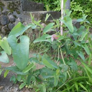 ☆彡 アゲハ蝶の季節 ☆彡