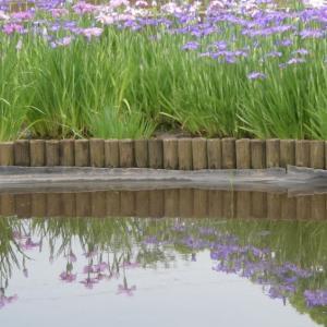 ☆彡 菖蒲田の花々  ☆彡