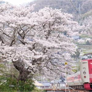 花と旬の列車