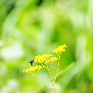 幸せの青い蜂は近くにいたか?