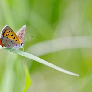 蝶の棲み処