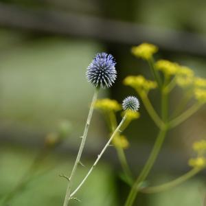幸せを運ぶ青い蜂はいつやって来るのだろう