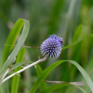 幸せを呼ぶ青い蜂を探して