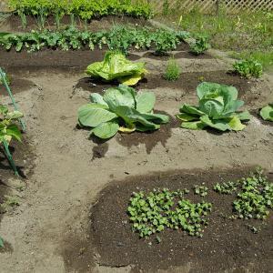 彗星と野菜達。