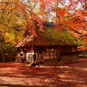 秋色 水谷茶屋