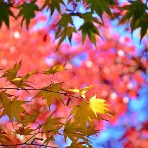 大山崎山荘美術館庭園の秋