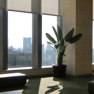 【絶景】自粛の隙間をついて…「丸ビル35階」からの展望はいいぞ!