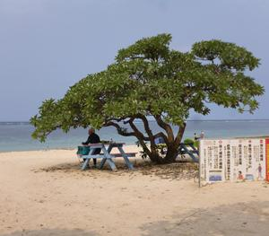 宮古島、比嘉ロードパーク、新城海岸、東平安名崎、写真16枚をHPに
