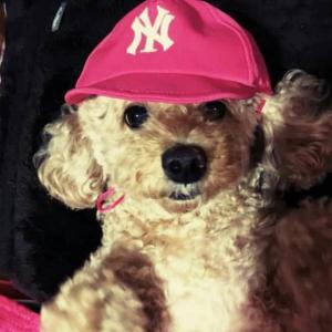 7月9日の「愛犬家族を訪ねて」は2匹の愛犬とワンライフを楽しまれている古宮様!