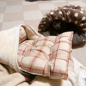 ぐーちゃんの寝方と河内弁 の巻